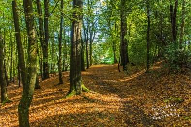 Ein Stück schlendern durch den Wald