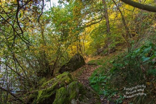 Rund um den Laacher See (52)