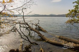 Rund um den Laacher See (71)