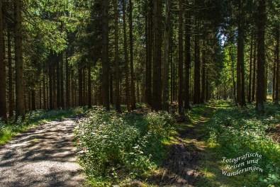Schattiger Waldweg auf dem Schwedensteig