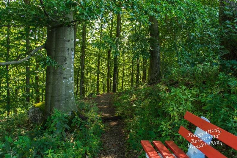 Waldweg W 1