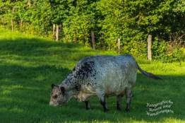Scheckige Kuh