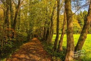 Traumhafte Wege in Altenberg