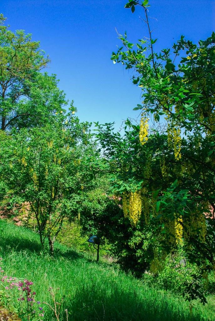 Grüne Umgebung an der Creuzburg