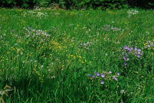 Wunderschöne Wege und Blumenwiesen rund um die Creuzburg