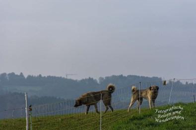 Turm_Route_Schloss-Homburg (46)