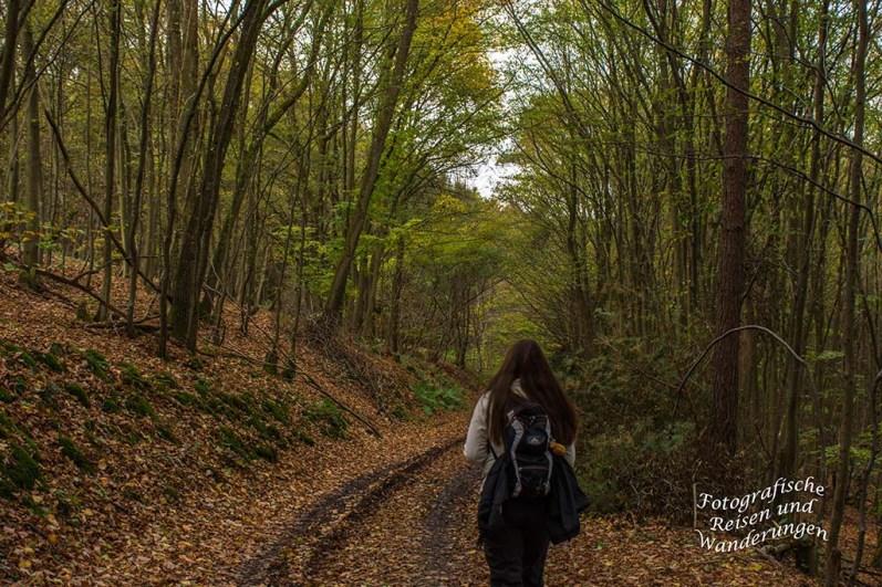 Ein Waldweg im Hinterland der Ahr-Weinberge