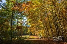 Herbstwaldwege mit Hochsitz - Moselseitensprung Graf Georg Johannes Weg