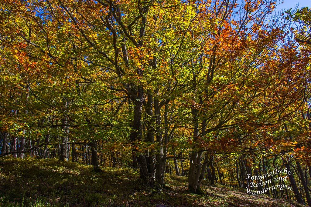 Herbstwald Veldenz