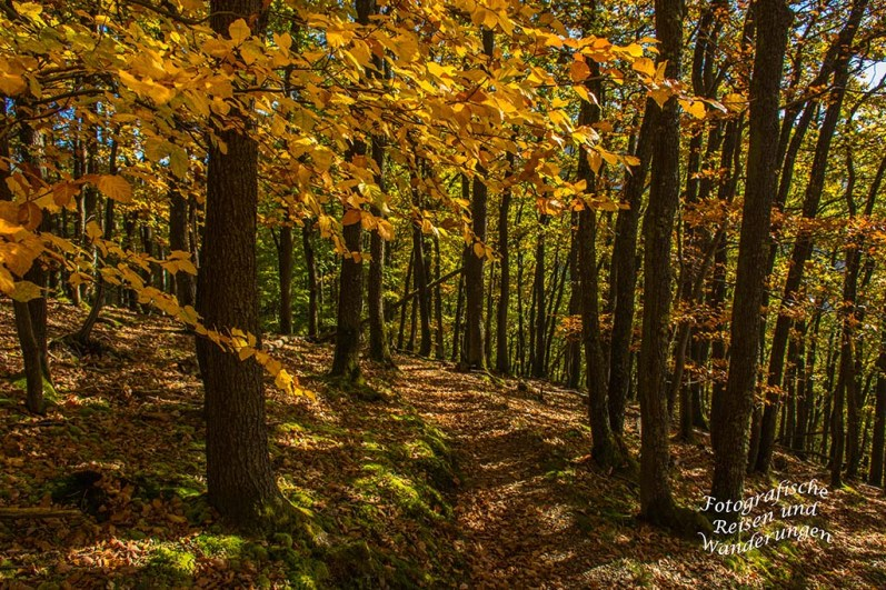 Bunter Herbstwald Veldenz