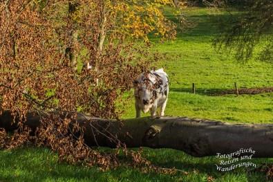 Ich sehe Dich! Sagt die Kuh!