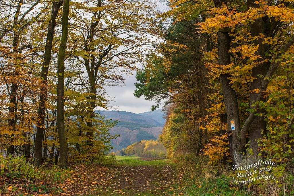 Ein Torbogen aus Bäumen - Riedener Seeblick
