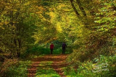 Waldweg entlang der Dhron mit Wanderern