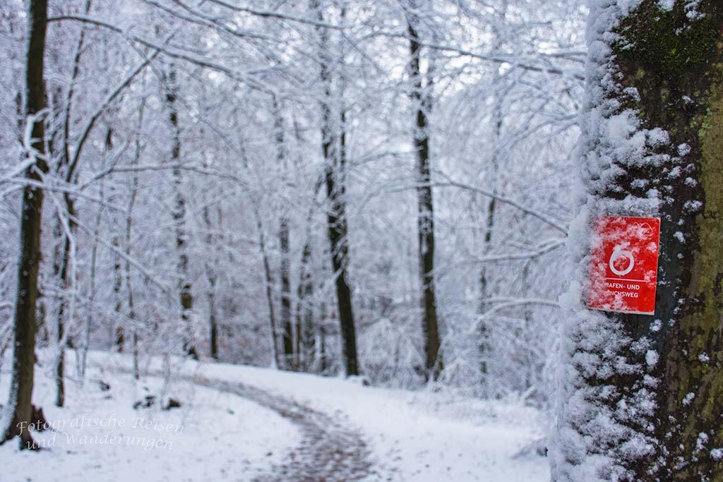 Der Bergische Streifzug Mönchsweg verläuft auf diesem Waldweg
