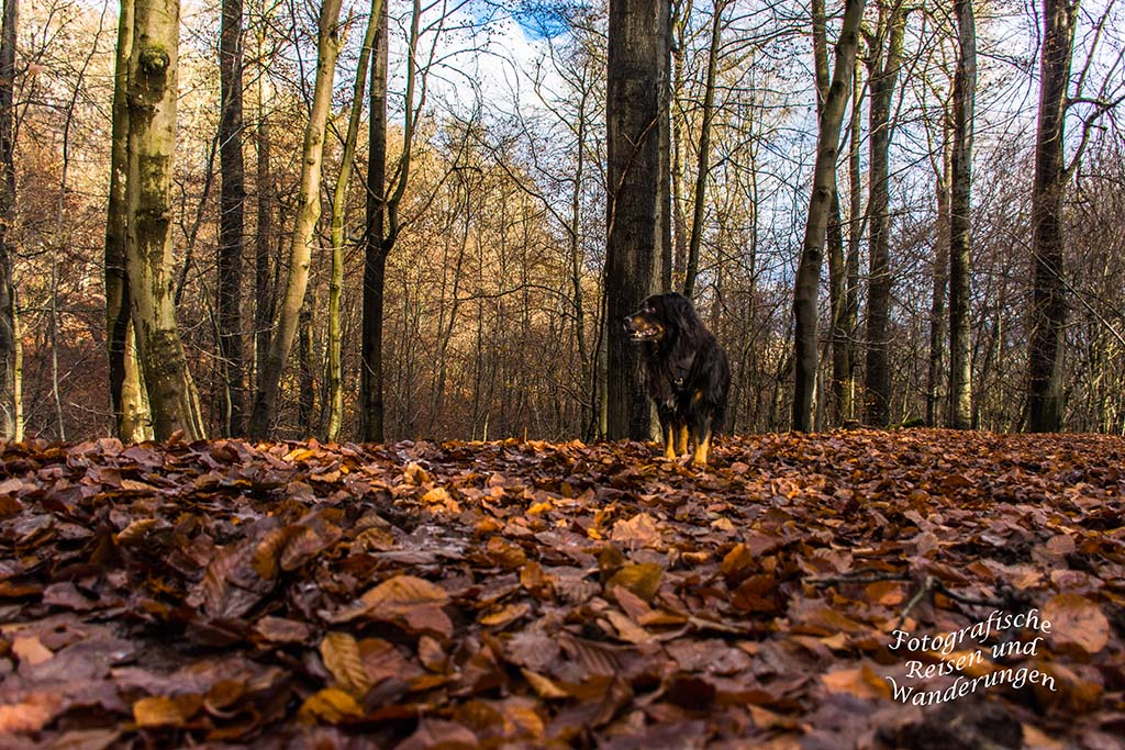 Mein Hund Spike auf Waldweg