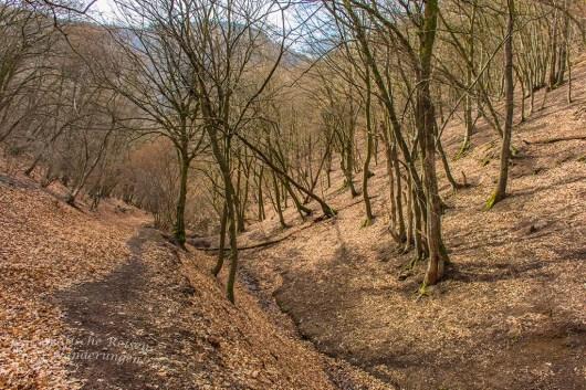 Waldweg im Winter bei Ahrbrück