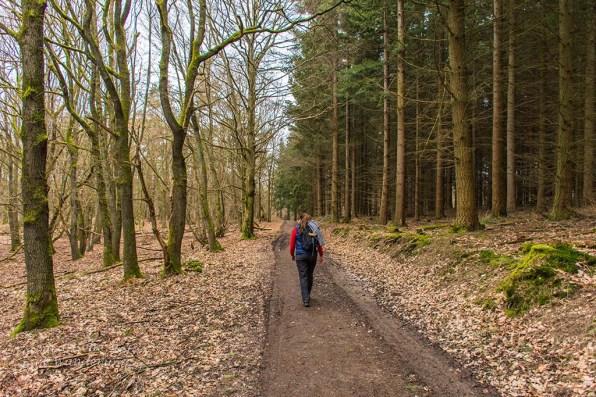 Breite Forstwege