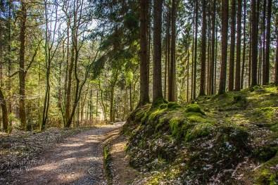 So wundervolle Waldwege