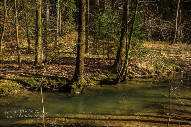 Grünes Wasser im Eifgenbach