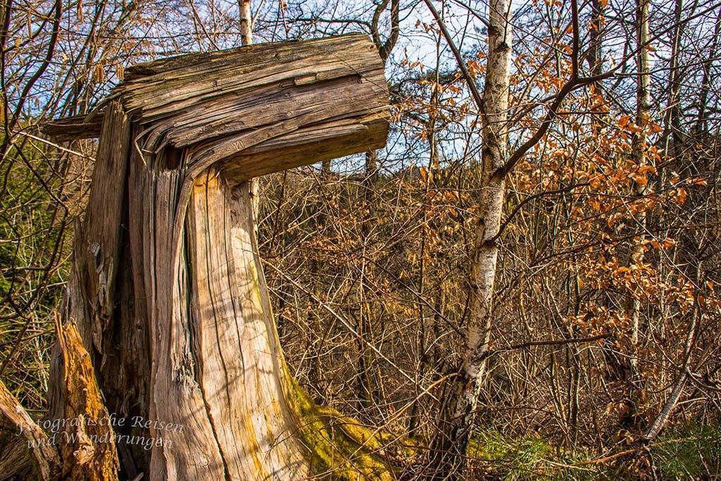 Baumstumpf auf dem Burscheider Schluchtenpfad
