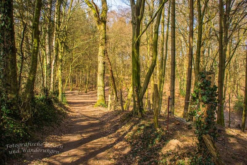 Waldweg auf dem Burscheider Schluchtenpfad