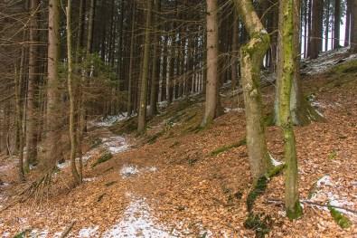 Ein netter Waldweg mit einem Laubteppich - Mag ich