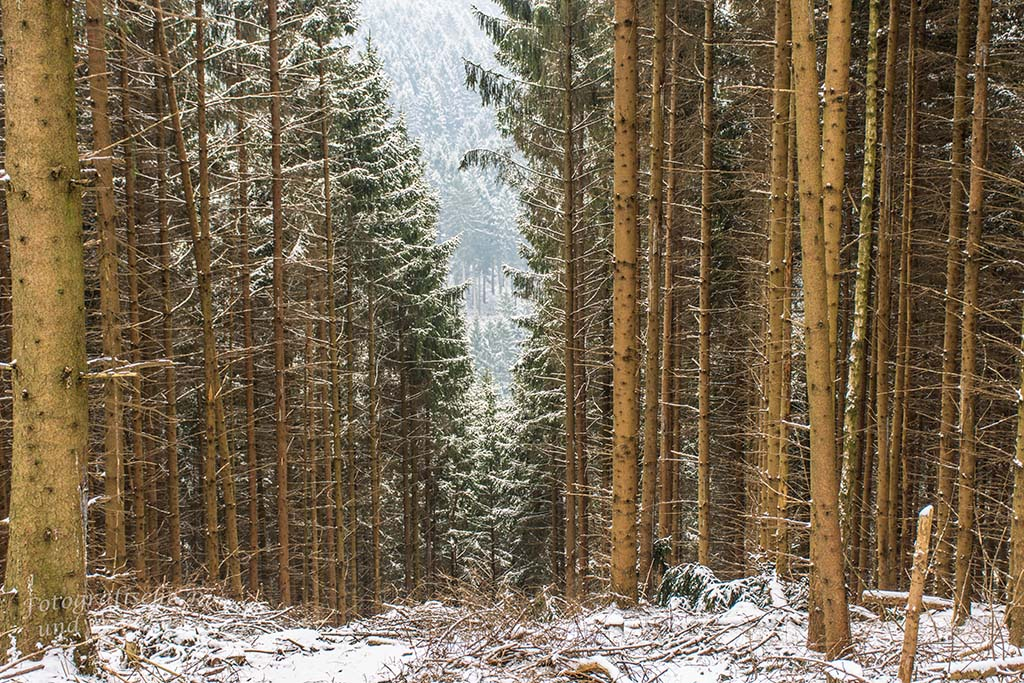 Winter am Eifgenbach (14)