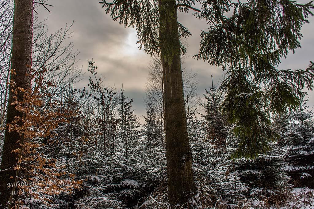 Winter am Eifgenbach (25)