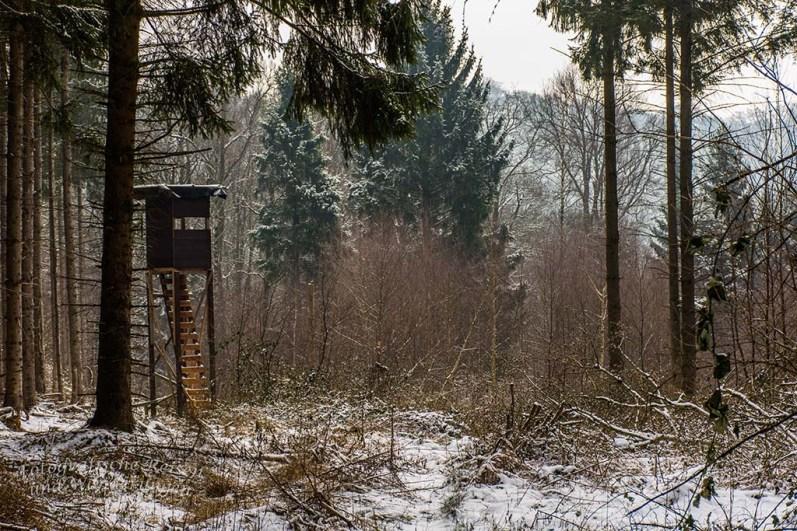Winter am Eifgenbach (31)