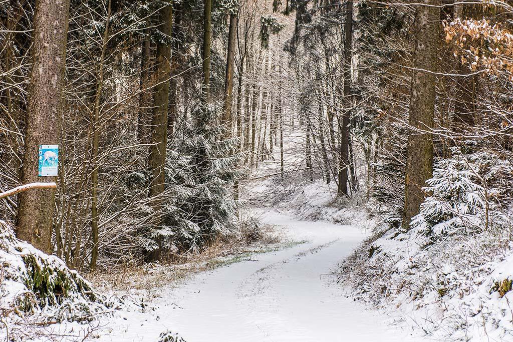 Tückisch harmlos sieht dieser Waldweg aus, ja einladend wirkt er auf mich