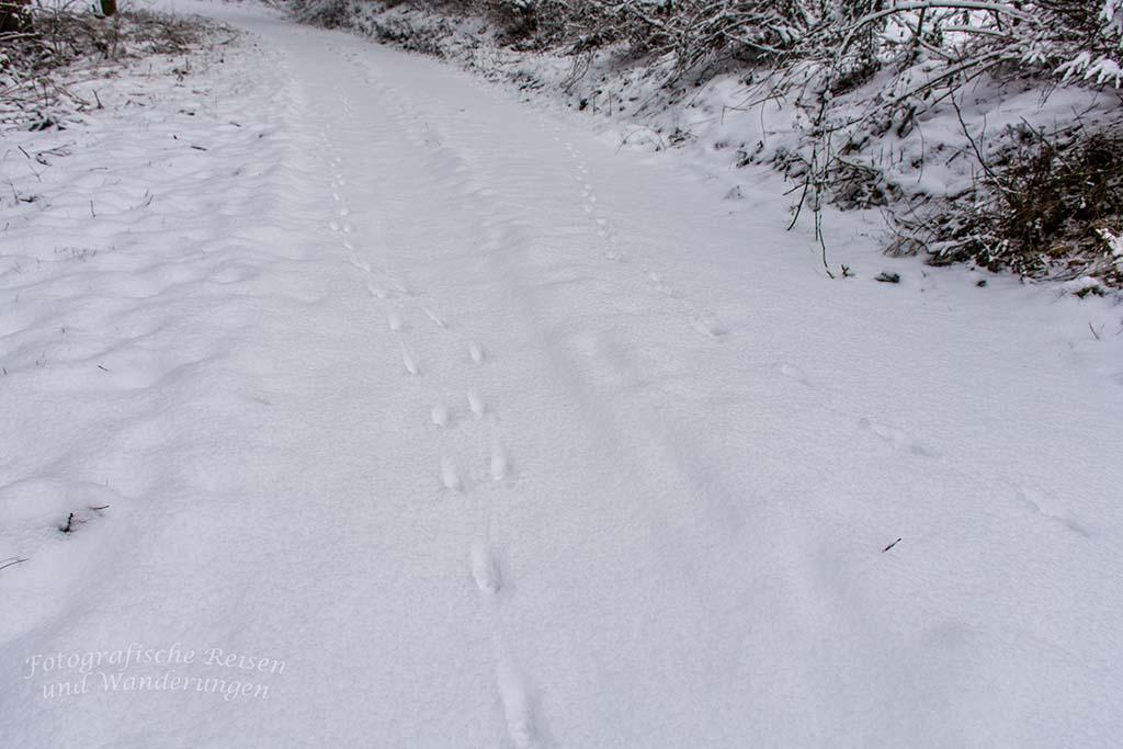 Winter am Eifgenbach (39)