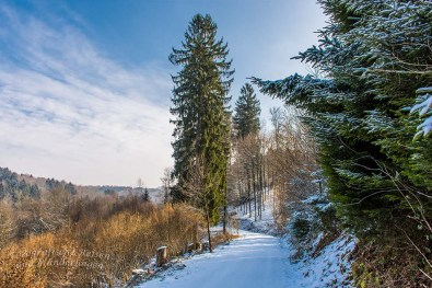 Winter am Eifgenbach (68)