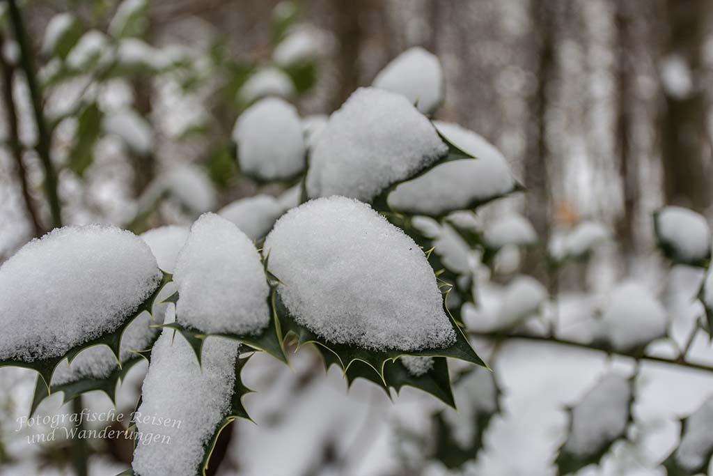 Winter am Eifgenbach (8)