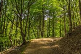 Waldweg nach Muchensiefen