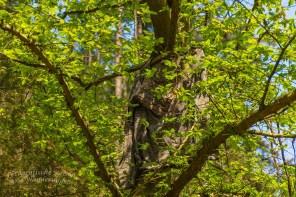 Ein T-Shirt hängt im Walde ganz still und stumm