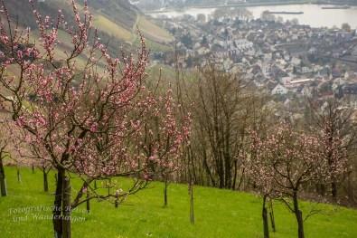 Rheinsteig Rheinbrohl nach Leutesdorf (105)