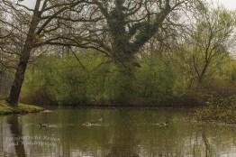 Nymphaeenweiher geheimnisvoll