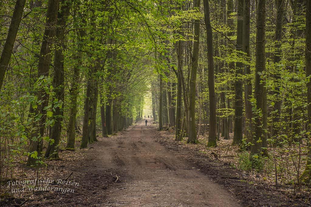 Westerholt Schloss und Wald (201)
