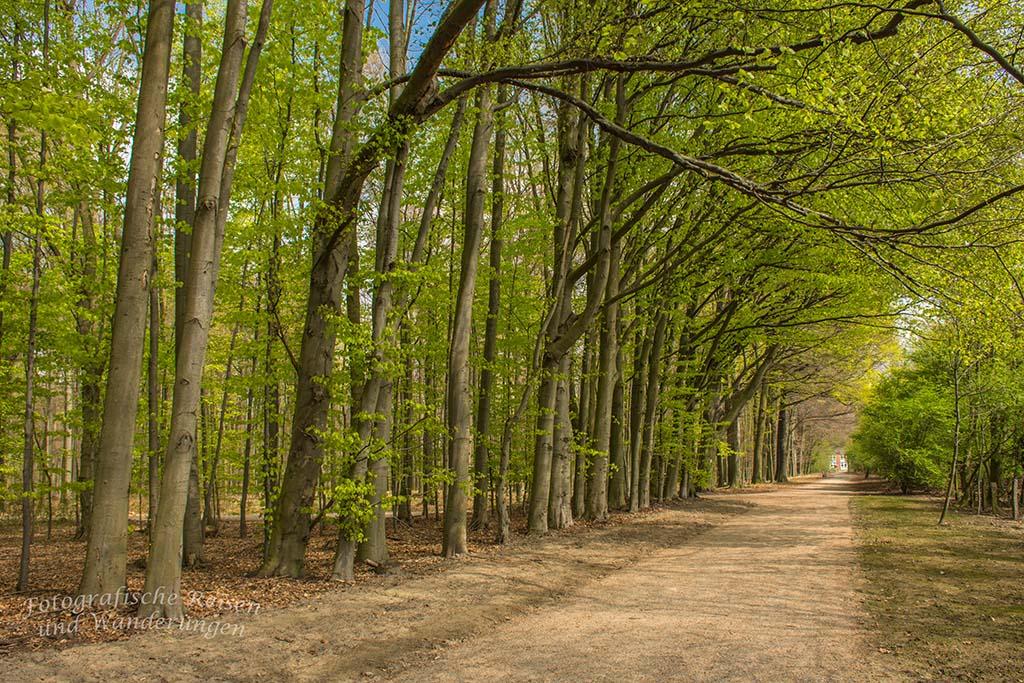 Westerholt Schloss und Wald (203)