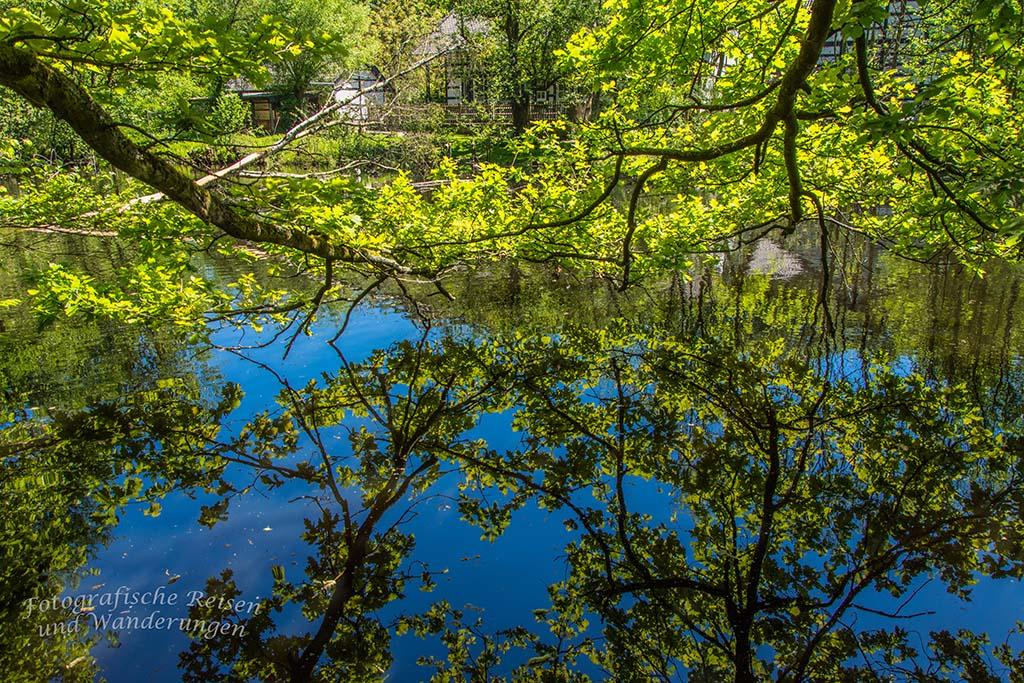 Der Teich hinter dem Haus Wildenrath