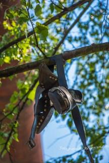 In einem Baum hängen Schuhe