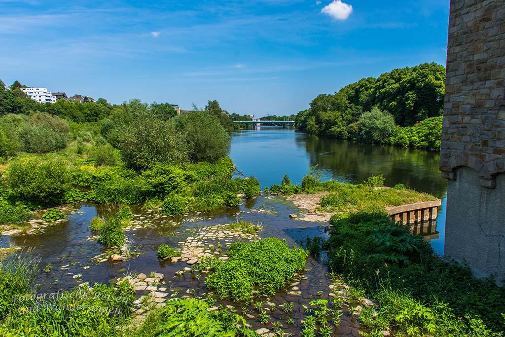 Altarm der Ruhr, ein Biotop für Wassertiere und Pflanzen