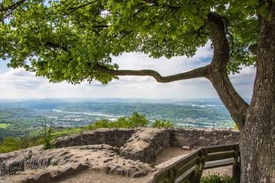 Den Baum sieht man von vielen Stellen im Siebengebirge