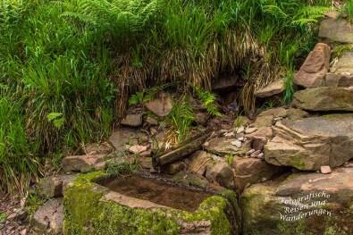 Ein Wassertrog mitten im Wald