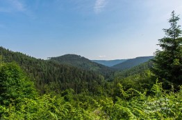 Blick ins Renchbachtal