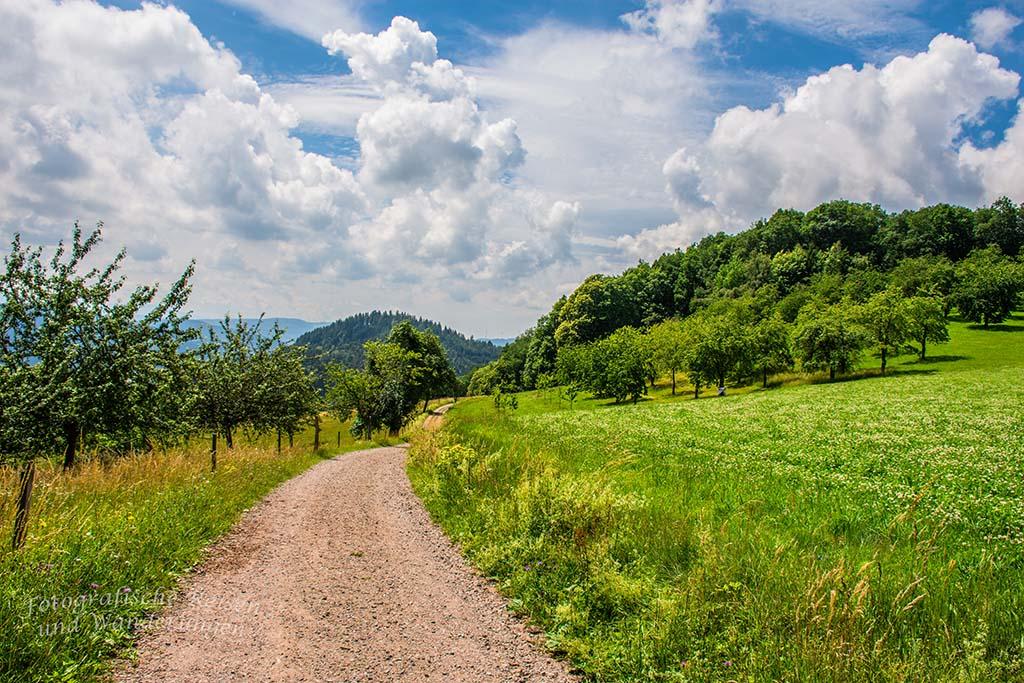 Hahn und Henne im Schwarzwald