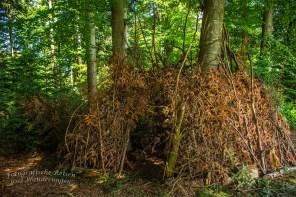 Eine Behausung der Waldwichtel