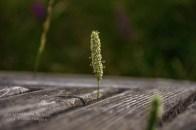 Gespielt und wieder ein Fotomotiv in der Eifel gefunden