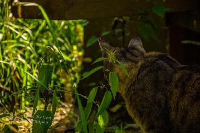 Frau Katze ist nicht in Schmuselaune, sondern unmittelbar nach diesem Foto auf Jagd gegangen