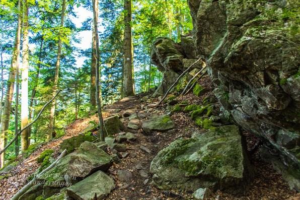 Der Himmelssteig in Bad Peterstal-Griesbach (42)